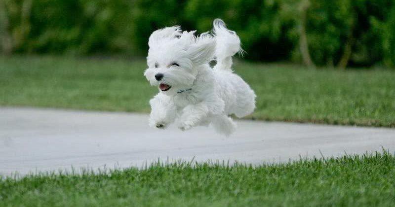 puppy boarding