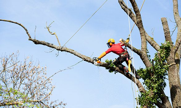 Reasons To Hire The Best Arborist In Windsor