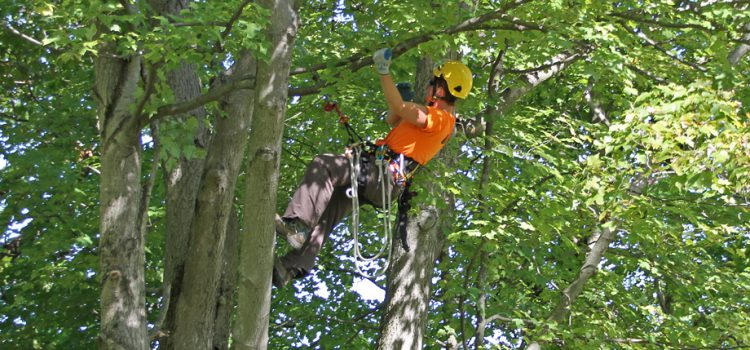 Important Things to Know if Your Arborist Report is Comprehensive Enough
