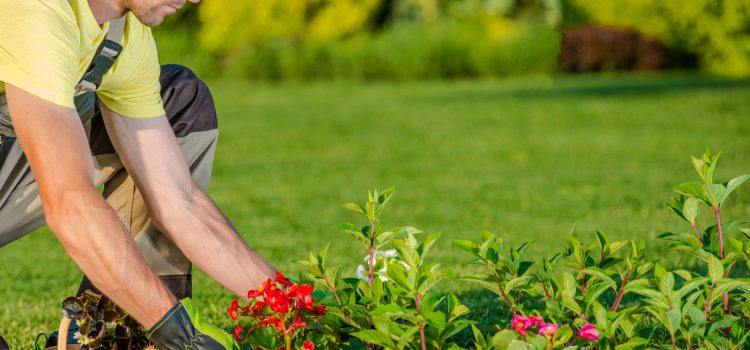 Reasons Why You Need To Hire Landscapers
