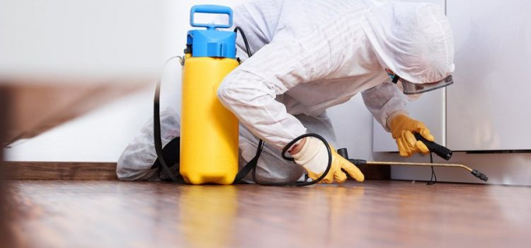 What are Effective Pest Control Methods?