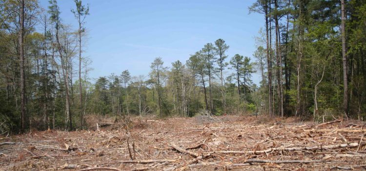 What Are The Benefits Of Opting For Forestry Mulching?