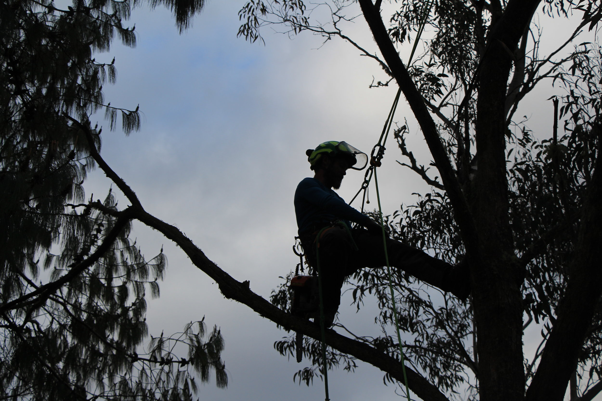 Why Every Arborist In Blue Mountains Asks Homeowners To Prune Their Trees
